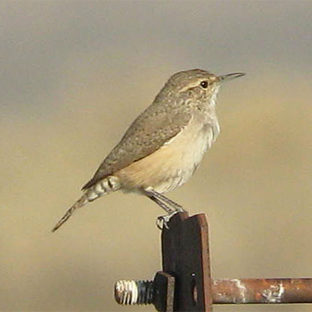 Birdfinders Birdwatching Holidays California