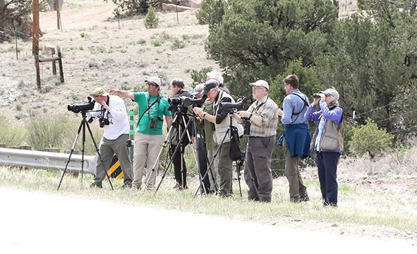 Birdfinders' group at Circle JC Ranch
