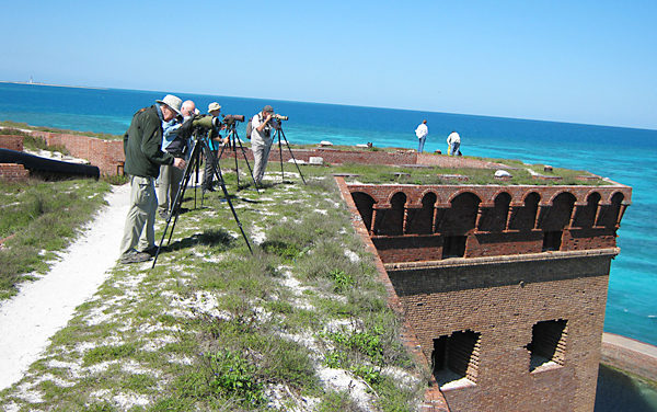 Birdfinders on the Dry Tortugas