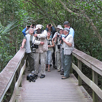 Birdfinders' group looking for Barred Owl