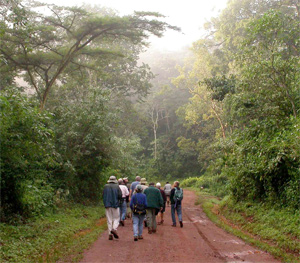The group in Kakamega Forest