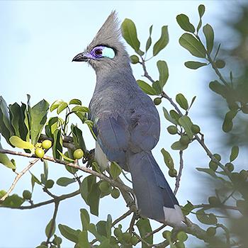 Birdfinders – Birdwa...